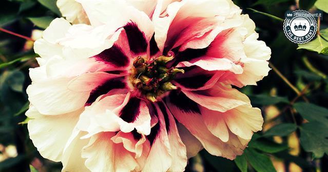 Lorto-botanico-di-Brera-e-i-suoi-fiori